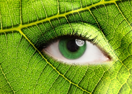 Photo for Green leaf looking at you - Royalty Free Image
