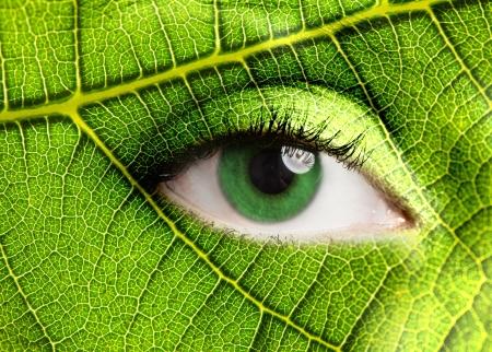 Foto de Green leaf looking at you - Imagen libre de derechos