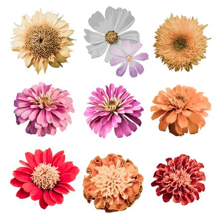 Illustration pour Vector floral design element set - image libre de droit