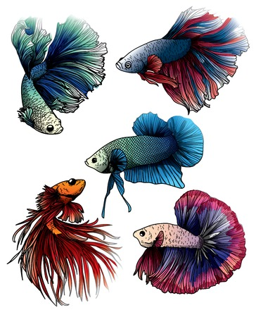 Illustration pour Colorful betta splendens fish hand drawing and sketch with line art illustration isolated on white background. - image libre de droit
