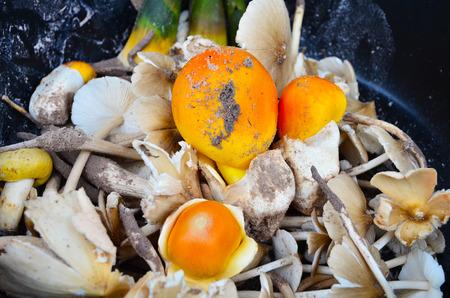 Amanita and Termitomyces mushroom