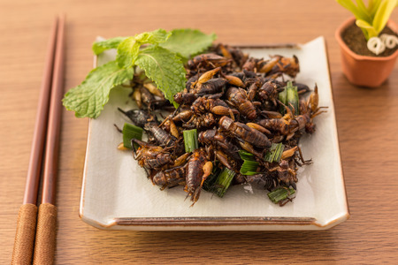 Fried insects - Cricket insect crispy with pandan after fried and add a light coating of sauce and garnish Thai pepper powder on white dish with chopsticks on wooden background, Select focus