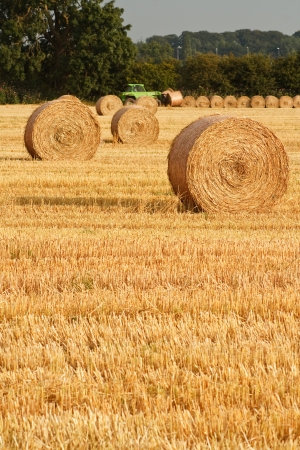 Freshly rolled golden hay bales in farmers recently harvested agricultural field