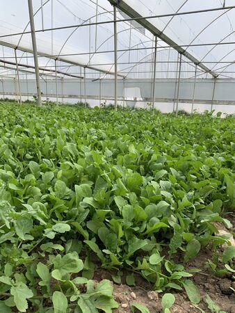 Foto für Empty signboard in Greenhouse for the cultivation of salad stock photo - Lizenzfreies Bild