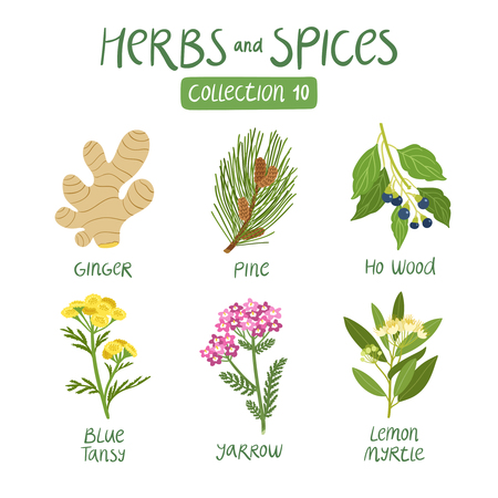 Illustration for Herbs and spices collection 10. For essential oils, ayurvedic medicine - Royalty Free Image