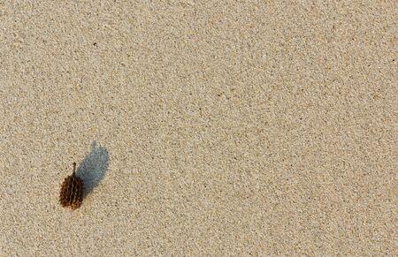 Pine nut on sand background