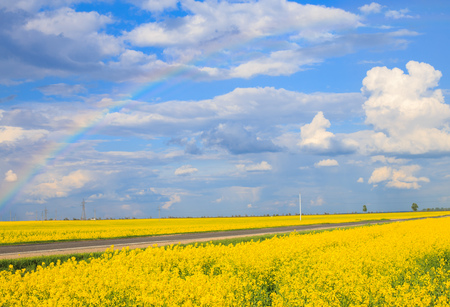 Photo for the rapeseed field with a blue sky - Royalty Free Image