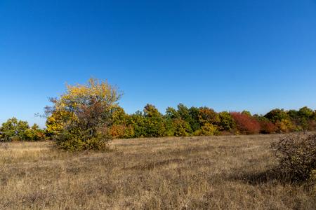 Autumn landscape of Cherna Gora (Monte Negro) mountain, Pernik Region, Bulgaria