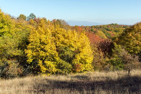 Photo for Autumn view of Cherna Gora (Monte Negro) mountain, Pernik Region, Bulgaria - Royalty Free Image