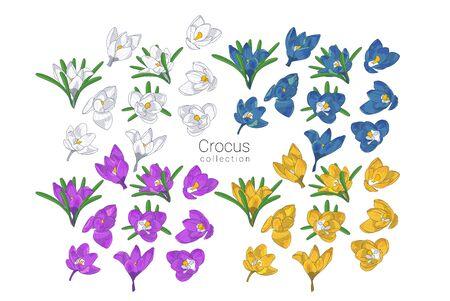 Illustration pour Set of Hand drawn colrful crocus flowers clipart. Floral design element. Isolated on white background. Vector illustration. - image libre de droit