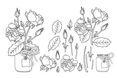 Illustration pour Hand drawn rose flowers in mason jar clipart monochrome set. Floral design element. Isolated on white background. Vector illustration. - image libre de droit