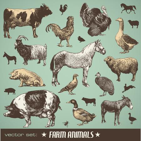 set: farm animals - stt of various retro illustrations