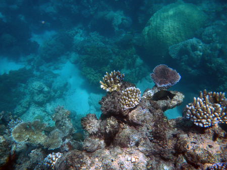 Photo pour Snorkeling on the Great Barrier Reef, Australia - image libre de droit