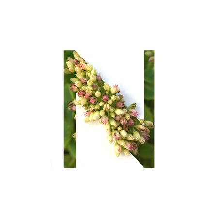 Foto de Cut out letter N with growing plant inside. Part of the alphabet. - Imagen libre de derechos
