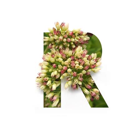 Foto de Cut out letter R with growing plant inside. Part of the alphabet. - Imagen libre de derechos