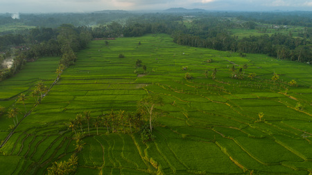 Aerial drone view of beautiful rice fields in Bali, Indonesia