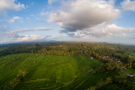 Aerial drone view of beautiful rice fields and cloudy summer sky in Bali, Indonesia