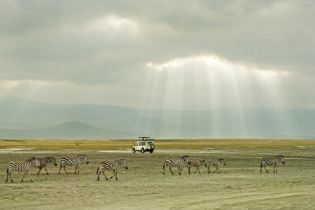 Zebras and Land Rover in Ngorongoro Crater, Tanzania, Africa