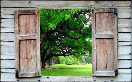 Photo pour big tree and old wood window - image libre de droit