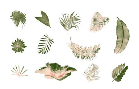 Foto de set of palm leaf on white background - Imagen libre de derechos