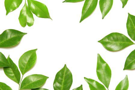 Photo pour collection tropical green leaf on white background - image libre de droit