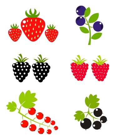 Berry fruits sweet collection. Vector illustration