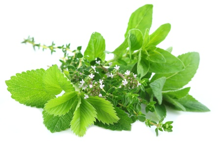 Fresh herbs bouquet isolated on white background