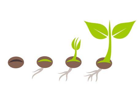 Illustration pour Plant seed germination stages. Vector illustration - image libre de droit