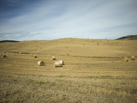 Foto per Campo di grano dopo mietitura con balle di fieno - Immagine Royalty Free
