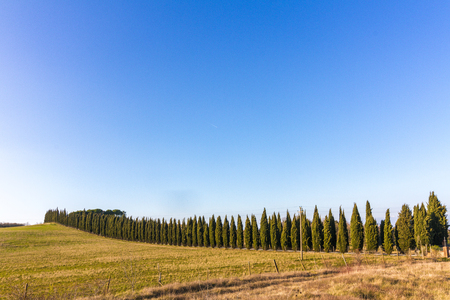 Foto per Cypress avenue in the Tuscan countryside - Immagine Royalty Free