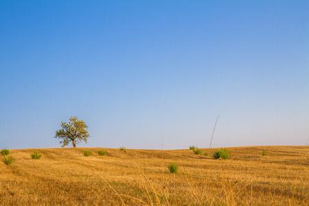 Foto per Paesaggio di campagna toscana - Immagine Royalty Free
