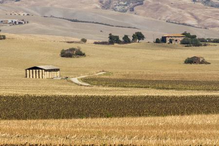Foto per Wheat field farm - Immagine Royalty Free