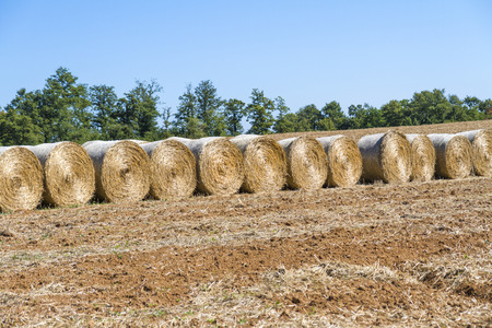 Foto per Bales of hay after wheat harvest - Immagine Royalty Free