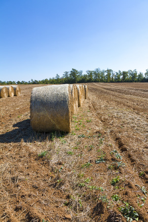 Foto per Bales of hay after harvest - Immagine Royalty Free