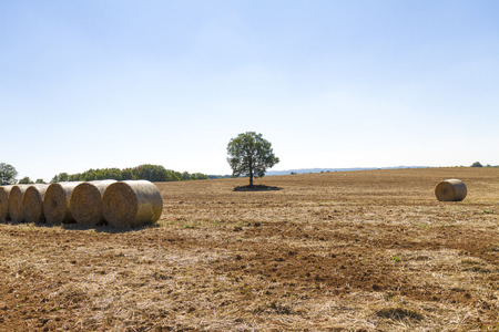 Foto per wheat field just after harvesting with hay bales - Immagine Royalty Free