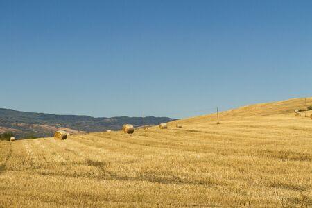 Foto per campo di grano con balle di fieno - Immagine Royalty Free