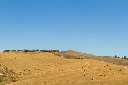 Foto per campo di grano con balle di fieno dopo la mietitura - Immagine Royalty Free