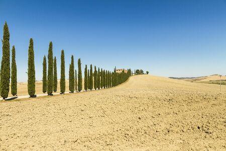 Foto per ingresso con viale alberato di casa colonica in Toscana - Immagine Royalty Free