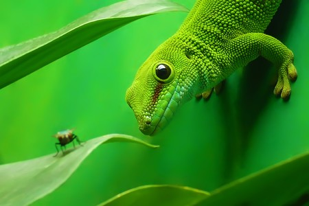 green gecko lizard on the vertikal green wall surrounded by plants
