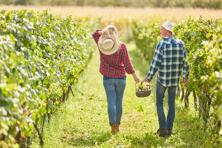 Foto für Young couple on a summer outing in the vineyard with picnic basket - Lizenzfreies Bild