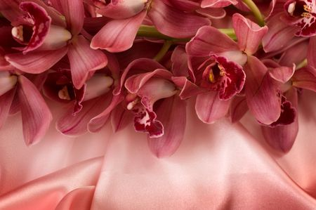 Orchid and silk