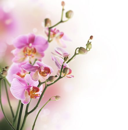 Beautiful Orchid border isolated on white.Selective focus
