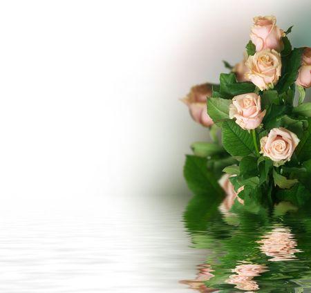 Photo pour Beautiful Roses  - image libre de droit