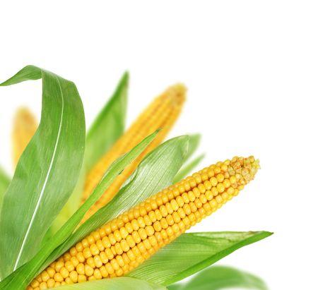 Foto für Sweet Corn isolated on white - Lizenzfreies Bild