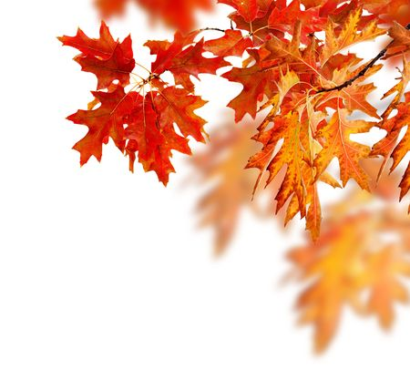 Foto per Autumn Leaves  - Immagine Royalty Free