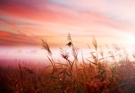 Foto per Foggy Landscape.Early Morning Mist. - Immagine Royalty Free