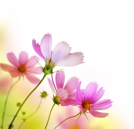 Photo for Beautiful Floral Border.Flower design - Royalty Free Image