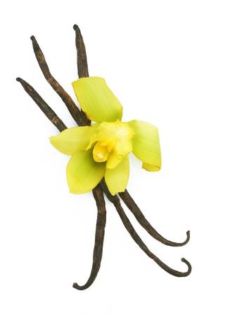 Photo for Vanilla - Royalty Free Image