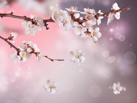 Spring Blossom Design
