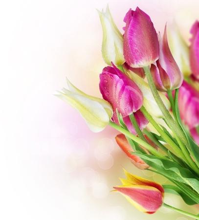 Spring Tulip Flowers border design